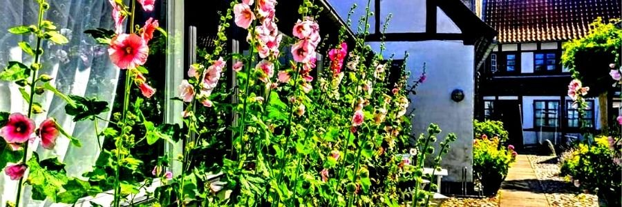 Stokroser i gården Vestergade 10 Baghuset